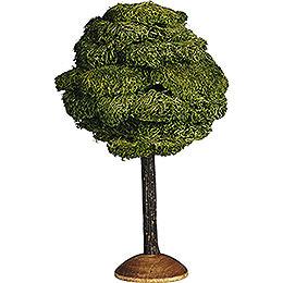 Broad leaf  -  17cm / 6.7inch