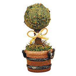 Set of three -  Miniature boxwood  -  6cm / 2,5inch